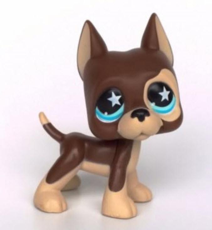 สุนัขเกรดเดน สีน้ำตาล ตาสีฟ้า ดาวขาว #817