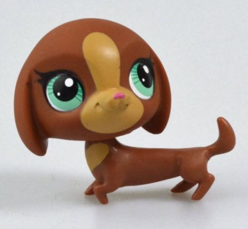 สุนัขดัชชุนด์ สีน้ำตาล ตาสีเขียว