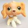 สุนัข Cocker Spaniel #79 สีน้ำตาล (หายากมาก)