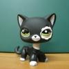 แมวเปอเซีย สีดำขอบตาขาว #2249 (หายาก)