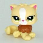 แมวเปอเซีย สีเหลือง #463