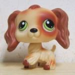 สุนัข Cocker Spaniel สีน้ำตาล ตาสีเขียว