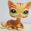 แมวเปอเซียลายเสือสีส้ม ตาสีเขียว thumbnail 1