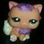 แมวเปอเซีย สีส้ม #2275 แต่งวิ๊งค์ thumbnail 1