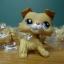 สุนัข Collie Spaniel สีน้ำตาล #2452 thumbnail 1