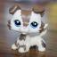 สุนัขคอลลี สีมอคค่า ตาสีม่วง (#2210) thumbnail 1