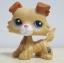 สุนัขคอลลี สีน้ำตาล ตาสีม่วง (#2452) thumbnail 1